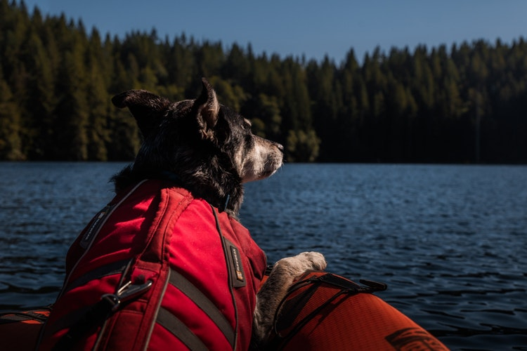 ruffwear-float-coat