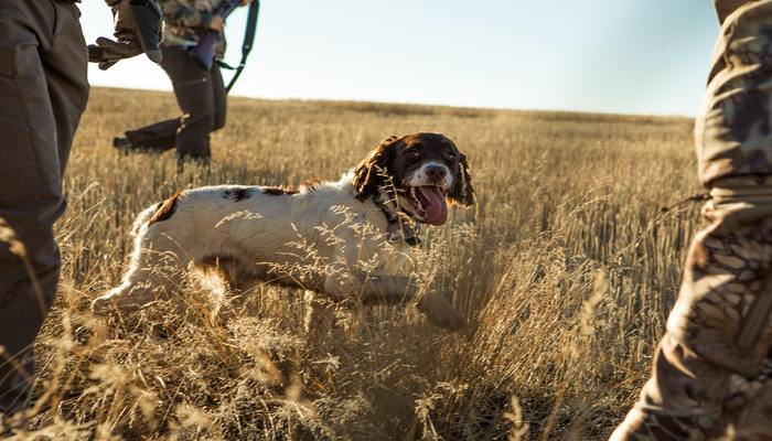 Best upland hunting pants
